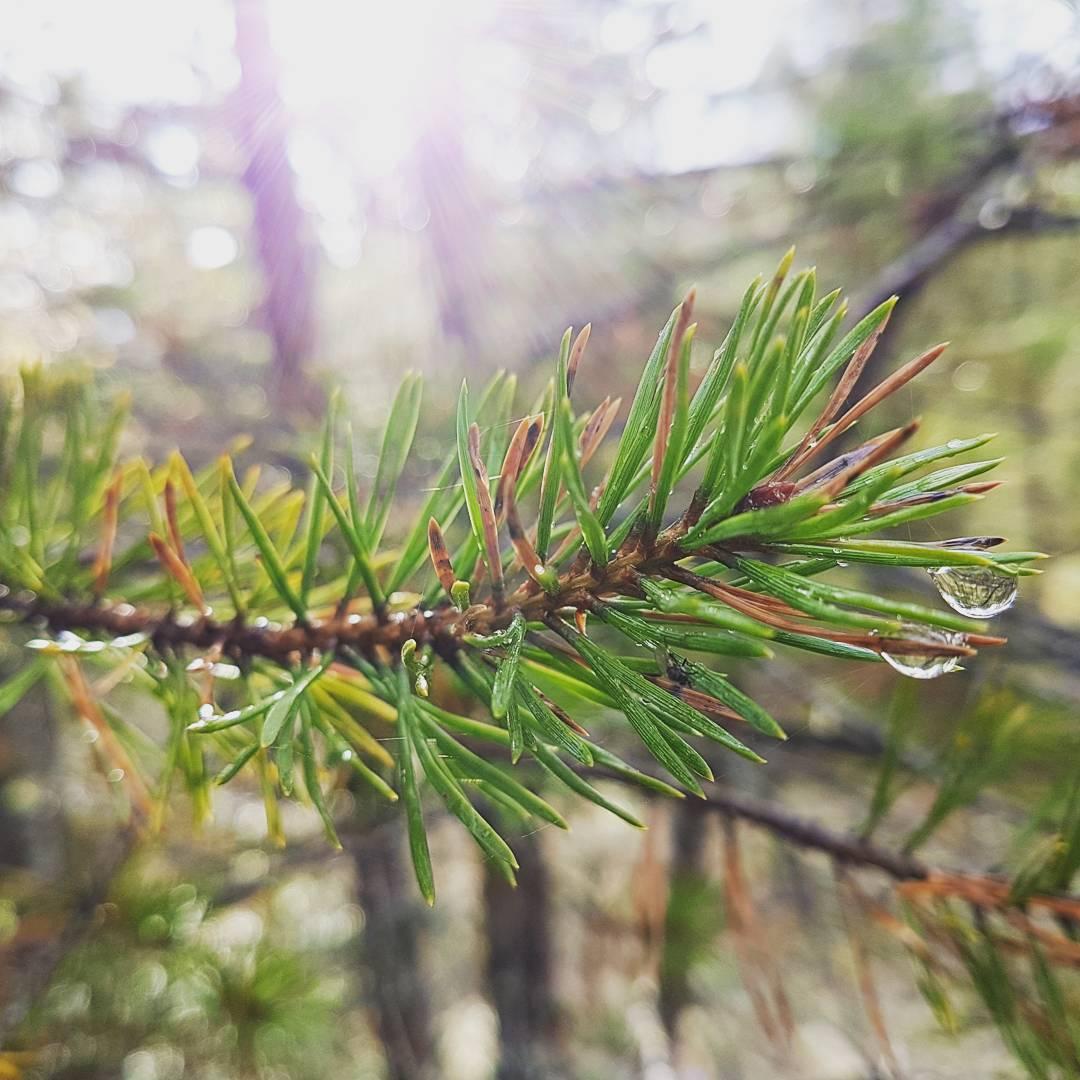 Shiny tree