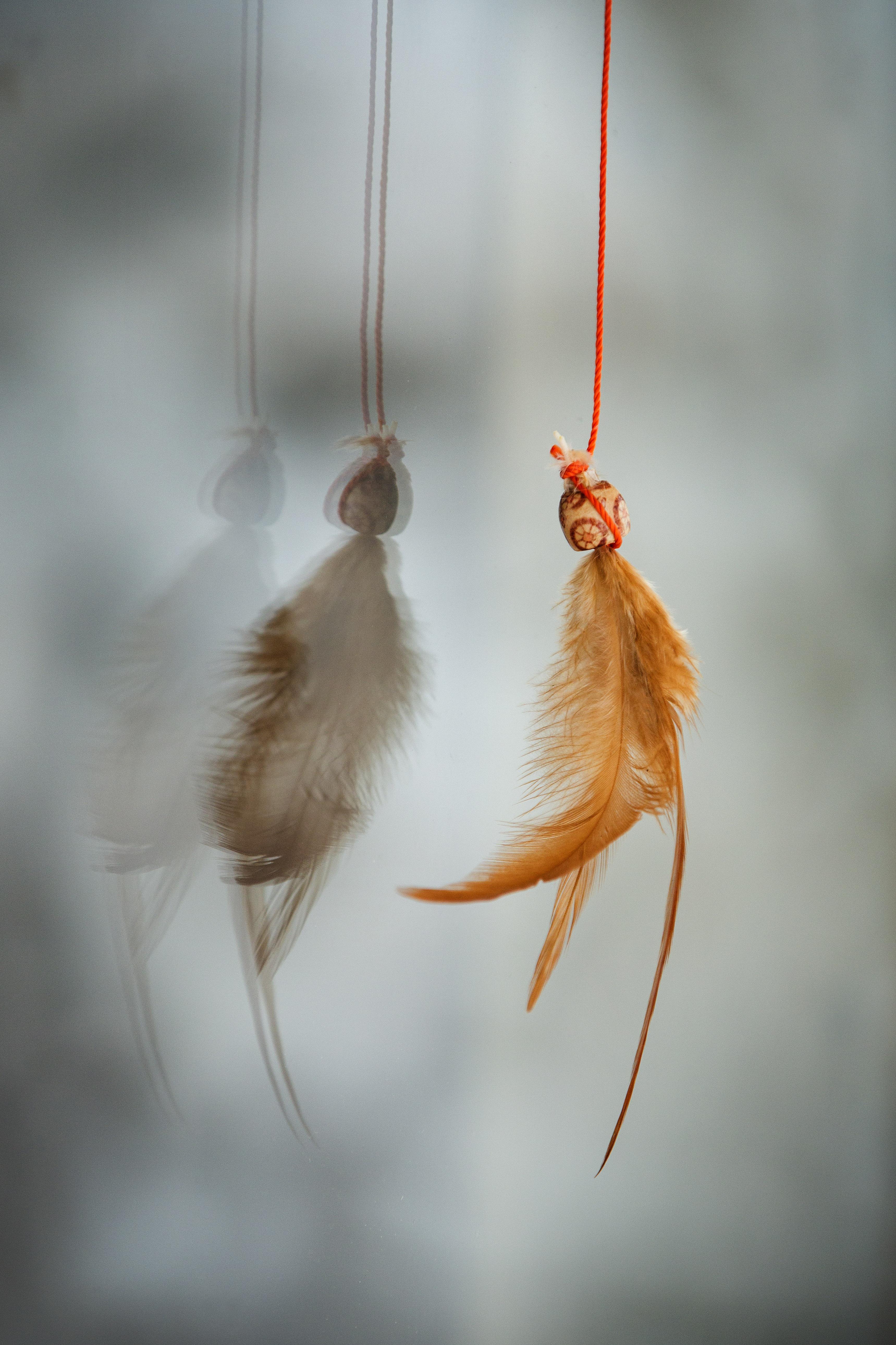 Amis des oiseaux