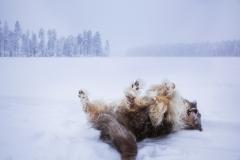 détente arctique