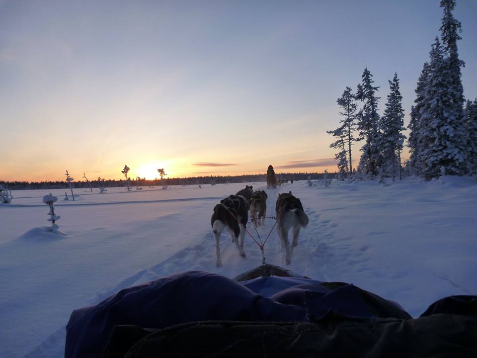 Activity holidays lapland with dog-sledding tour