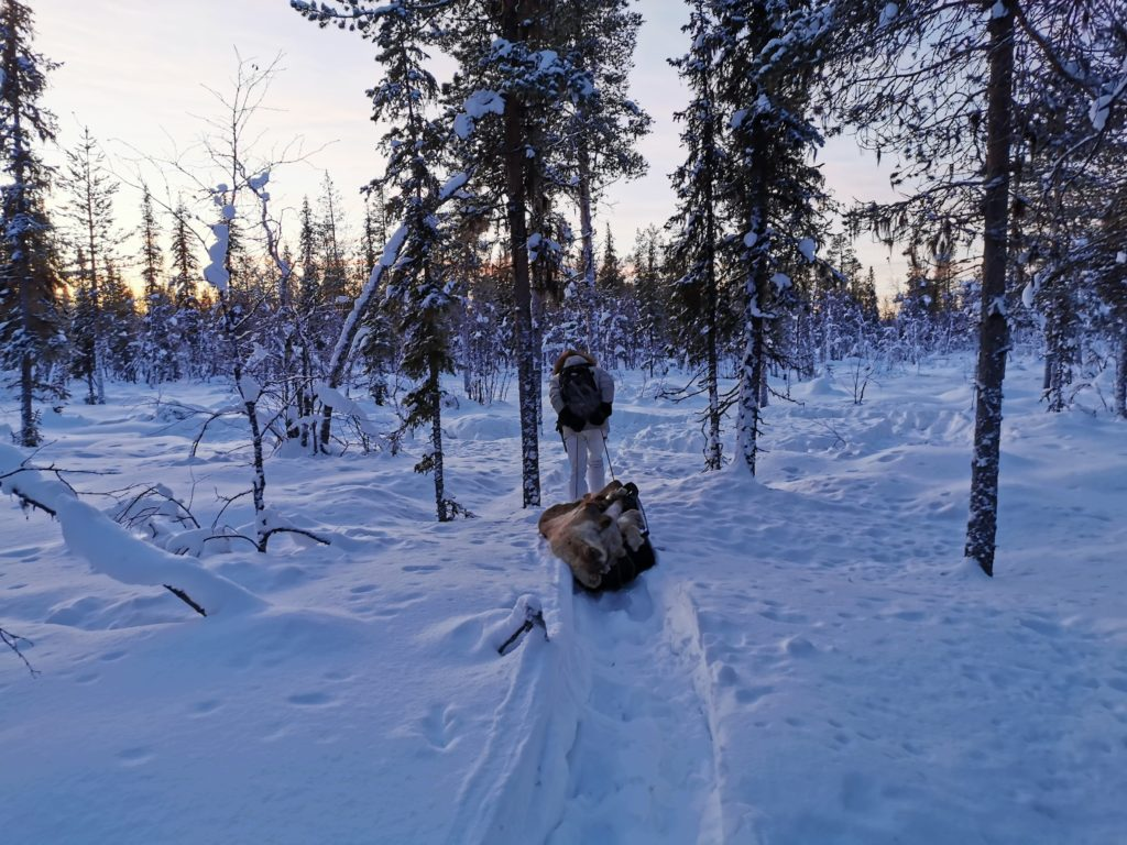 Survival swedish lapland