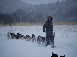 Be a musher for one day in Lapland